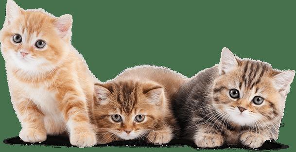 Гостиница для кошек во Всеволожске